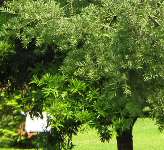 baume fur den hausgarten – reimplica, Garten Ideen
