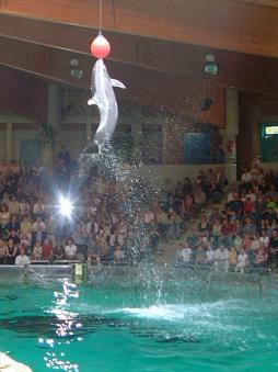 wollen delfine immer nur spielen