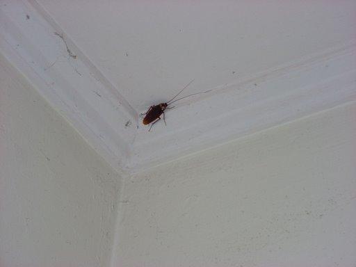 Die Verdammte Kakerlake